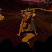 Teatro-del-Sol-104